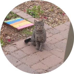 City of Tempe Cat Colony Caregivers